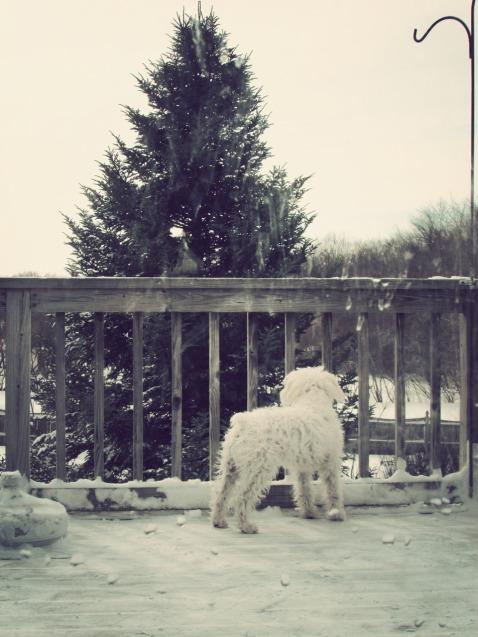 SnowpocalypseOliver2
