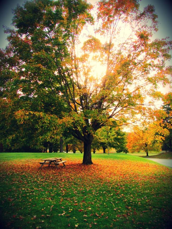 AutumnDrive1