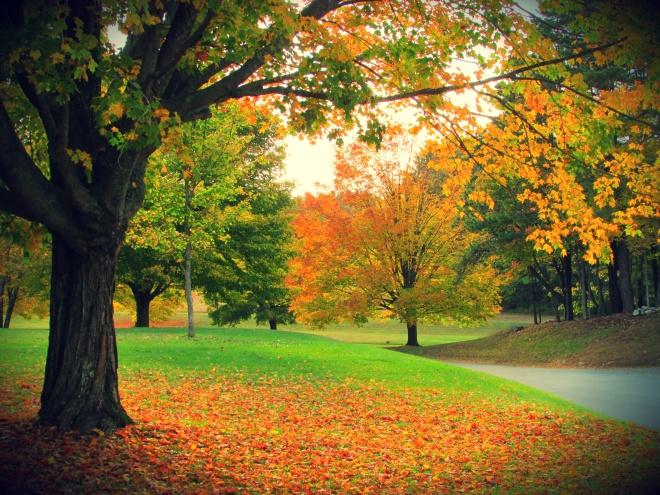 AutumnDrive2
