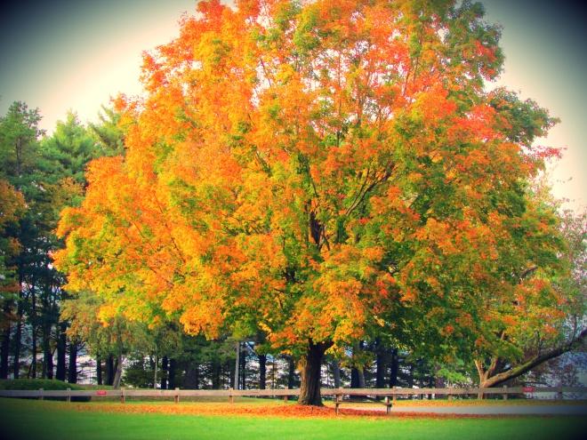AutumnDrive4