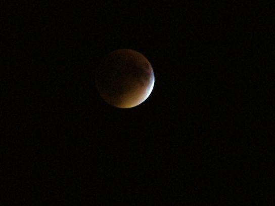 The blood moon eclipse- viewed from my backyard!