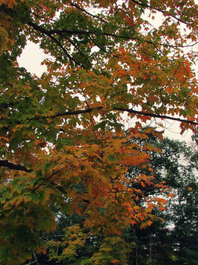 AutumnShade20153