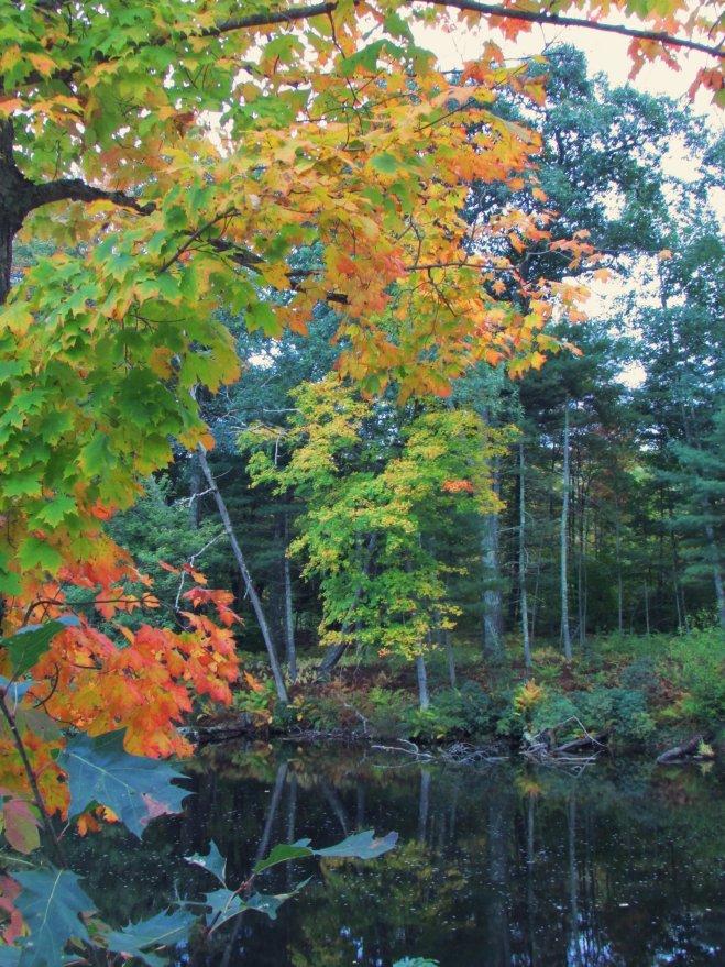 AutumnShade20154